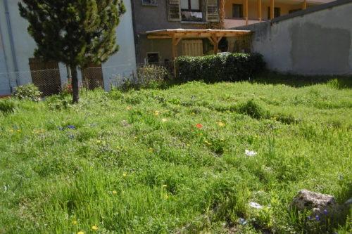 le jardin au début
