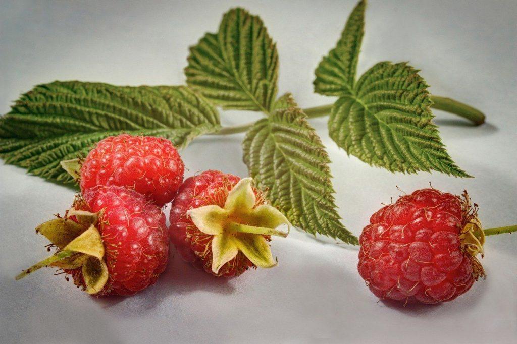 berry-5359962_1280